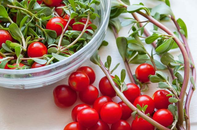 Fresh salad of common purslane and cherry tomatoes