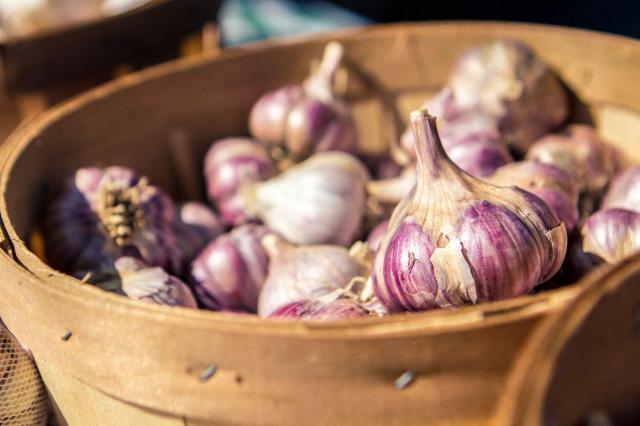 Organic Red Garlic Fall Harvest at the Farmers Market