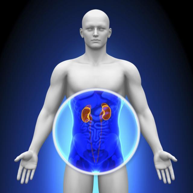 Medical X-Ray Scan - Kidneys