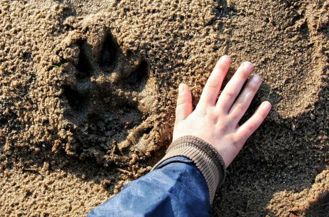Cropped Hand Of Child Touching Sand By Paw Print At Beach