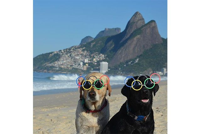 Two dogs wearing Olympics sunglasses at the beach