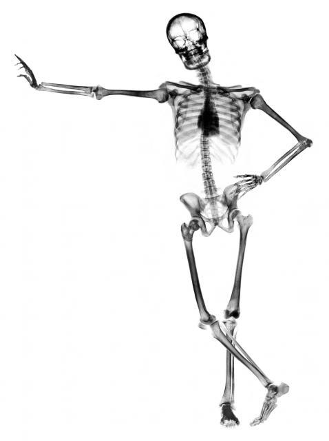 Leaning skeleton against white
